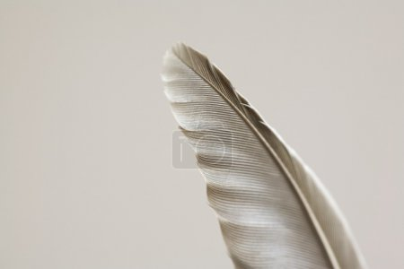 Detail Of Feather