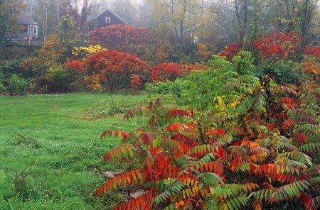 Quiet Meadow In Autumn