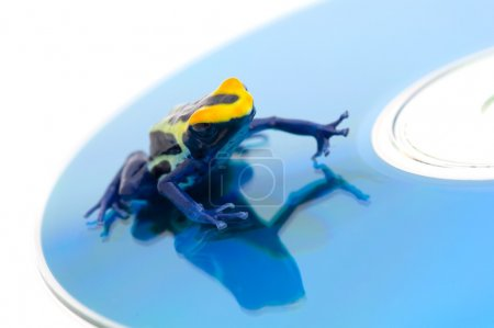 Poison Dart Frog On A Cd