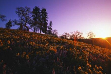 Photo pour Vue Basse-Angle De La Colline Au Coucher Du Soleil Avec Des Arbres Et Des Fleurs Florissantes . - image libre de droit