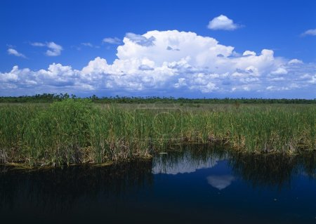 Pool Bordered By Sawgrass, Big Cypress National Preserve
