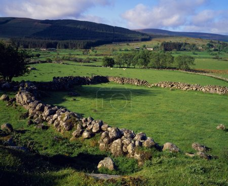 Irish Landscape With Stone Walls And Sheep Pastures