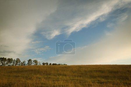 Foto de Campo seco de la hierba - Imagen libre de derechos