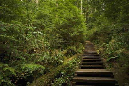 Foto de Camino a través del bosque - Imagen libre de derechos