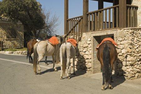 Horses For Hire Outside Restaurant, El Peñon, Sevilla Province, Andalucia, Spain