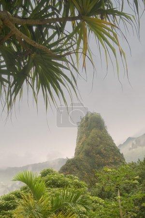 View Of Iao Needle Through Palm Trees, Maui, Hawaii, Usa