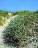 "Постер, картина, фотообои ""травы, песчаные дюны, Доллимаунт strand, залив, Дублин Ирландия"""