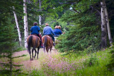 Photo for People Trail Riding In Forest - Royalty Free Image