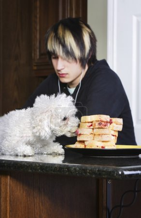 Teenager Listening To Music While His Dog Is On The Counter Eating Sandwiches