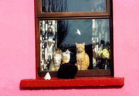 Photo for Cats At Window Near Kilkee, Co Clare, Ireland - Royalty Free Image