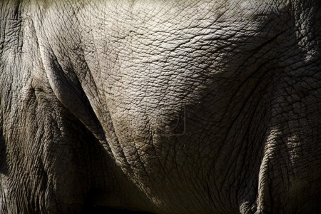 Close Up Of An Elephant's Side