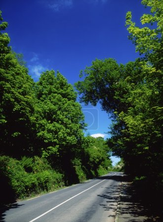 Road In The West Shore, Lough Swilly, Ireland