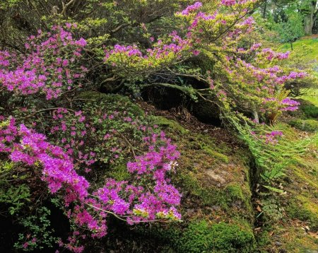 Flowers And Moss