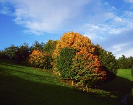 Trees, Autumn, September, Ireland