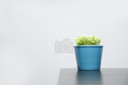 Plant In A Blue Pot