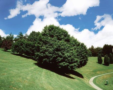 Trees, July, Summer, Ireland
