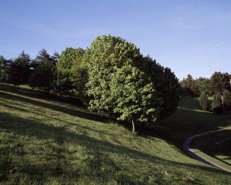 Trees, June, Summer, Ireland