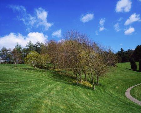 Trees, April, Spring, Ireland