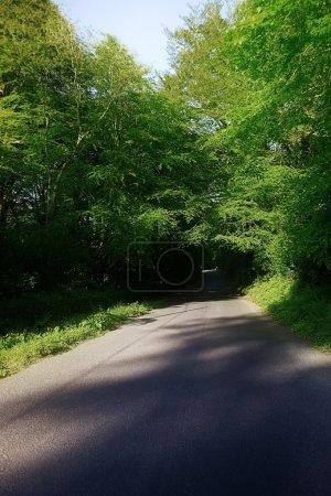 Country Road & Trees, Stradbally, Co Waterford, Ireland