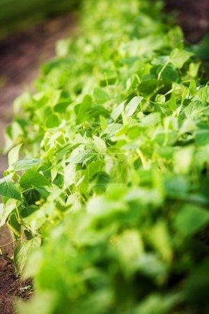 Foto de Planta verde - Imagen libre de derechos