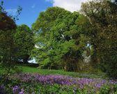 Wild Garden In Ireland