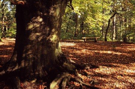 Photo pour Tronc d'arbre grand parmi les feuilles tombées - image libre de droit