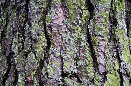 Photo for Close Up Of Tree Bark - Royalty Free Image