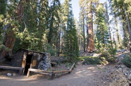 Tharp log in Sequoia national park