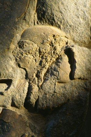 Stone Relief, Luxor Temple, Luxor, Egypt