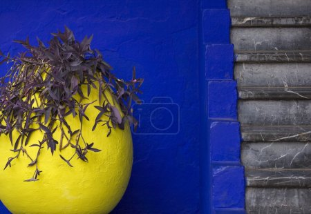 Vivid combination of colour and texture at the marjorelle gardens
