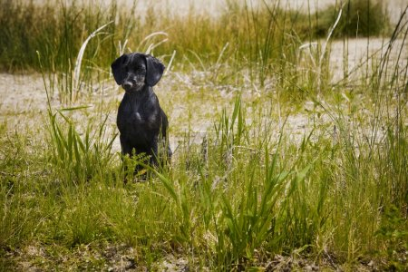 A Dog Sitting In Tall Grass