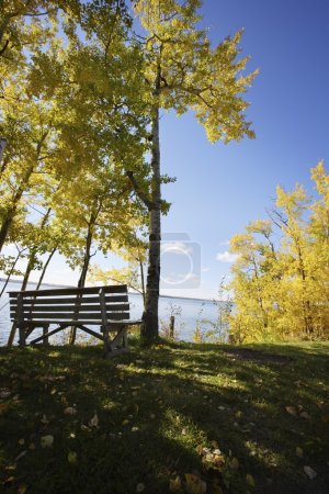 Park Bench Beside A Lake In Fall