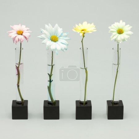 Photo pour Quatre fleurs - image libre de droit