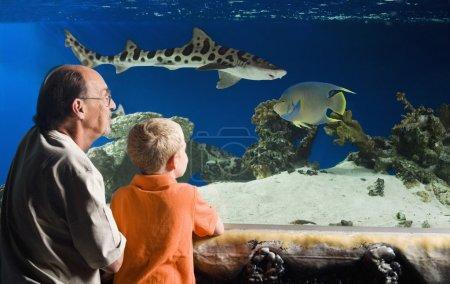 Grandfather And Grandson Watching Fish At Aquarium...