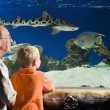 Grandfather And Grandson Watching Fish At Aquarium...