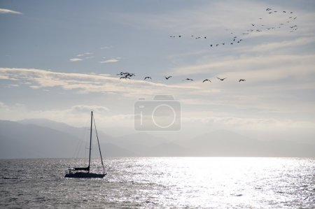 Sailboat With Birds Flying Overhead