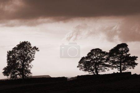 Tree Silhouette, Derbyshire, Inglaterra