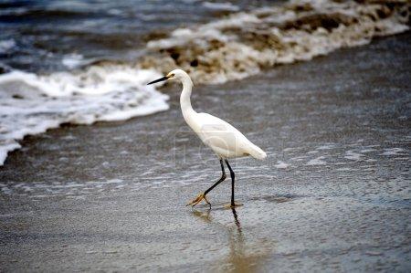 Photo pour Grue sur la plage - image libre de droit