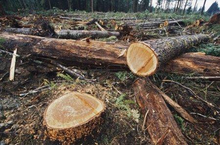 Photo pour Couper les journaux dans la zone d'exploitation forestière - image libre de droit