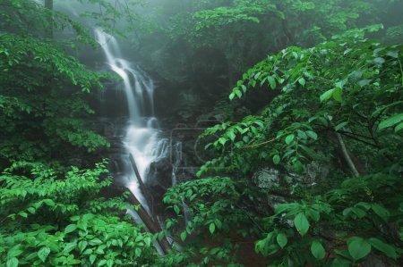 Fog And Lush, Green Foliage Surround Lower Doyles River Falls