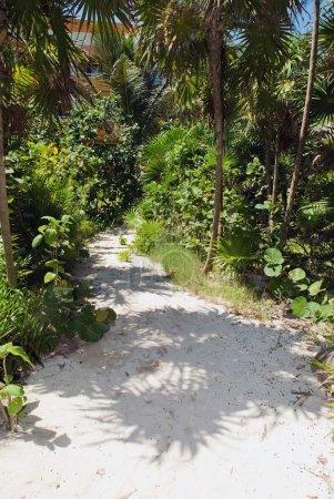 Sand Trail Through The Palm Trees