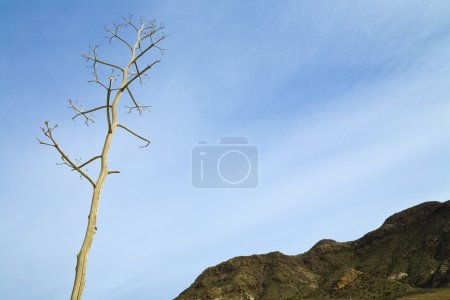 Dried Out Plant Shows Against A Blue Sky