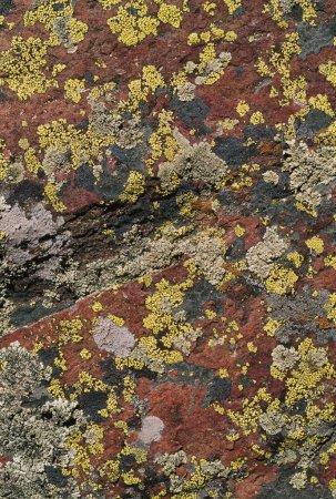 Lichen Pattern On Boulder