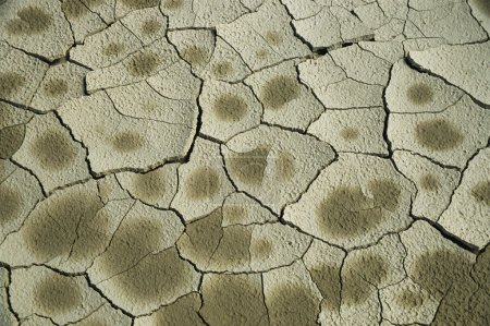 Dry Cracked Mud