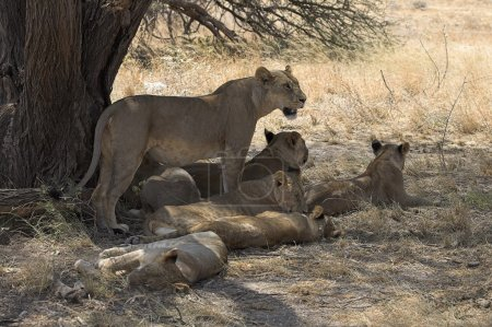 Samburu National Reserve, Kenya, Africa