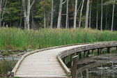 Wooden boardwalk over pone