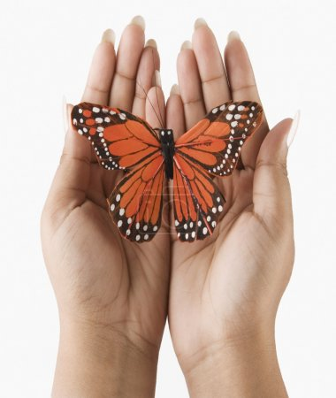 Photo for Woman's hands holding a butterfly - Royalty Free Image