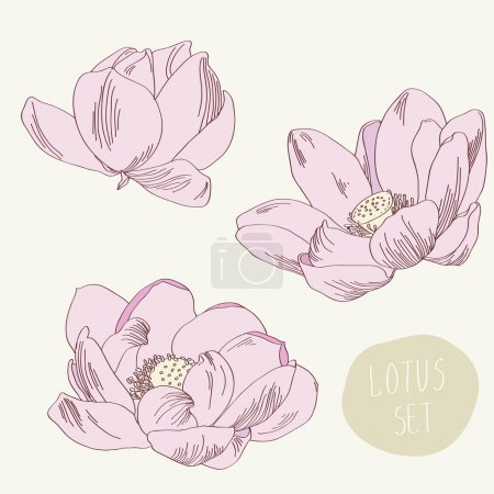 Flower lotus illustration in vector