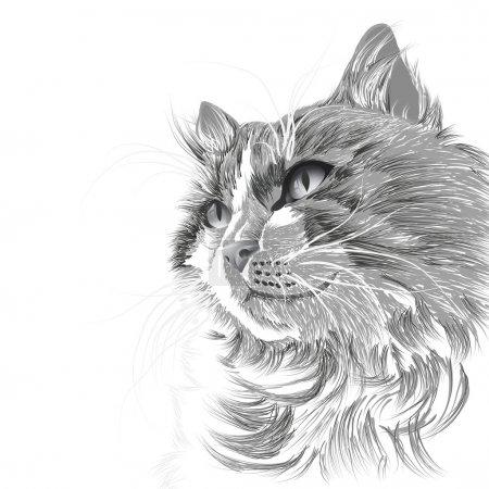 Illustration pour Tête d'illustration d'un chat gris - image libre de droit