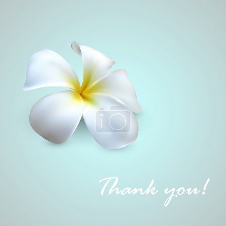 Illustration for Vector background with exotic frangipani flower. Thank you! - Royalty Free Image
